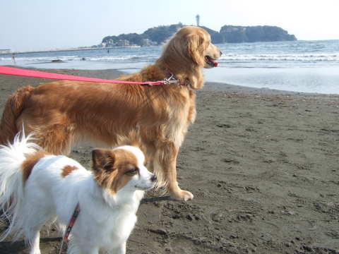 2011_0611 3月末の海で1.jpg