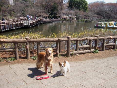 2011_0328井の頭公園01.jpg