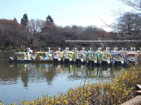 2011_0328井の頭公園02.jpg