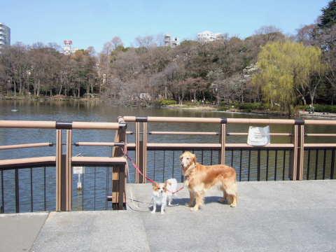 2011_0328井の頭公園03.jpg