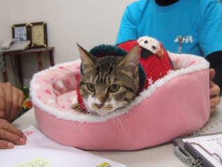 2010_0418-クリスマス猫ちゃん.jpg