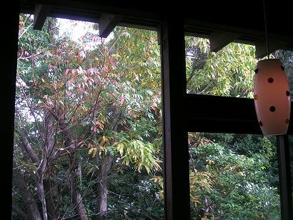 テラスから見える色づくハゼの木