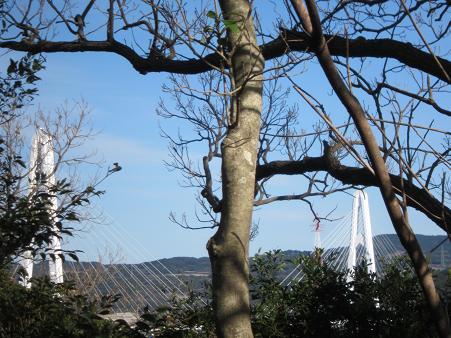 冬空に映える大島大橋
