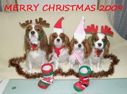 クリスマス 2009