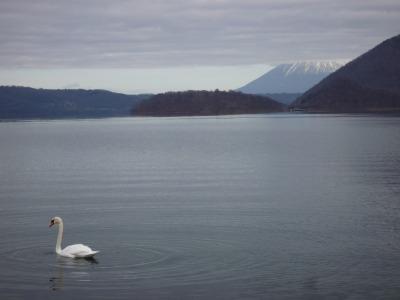 白鳥の湖.jpg