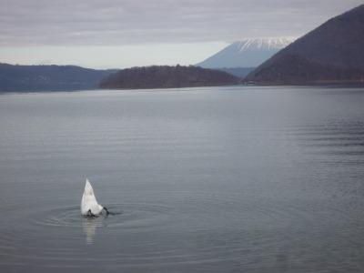 白鳥のおしりの湖.jpg