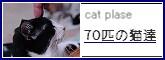 70匹の猫たちバナー