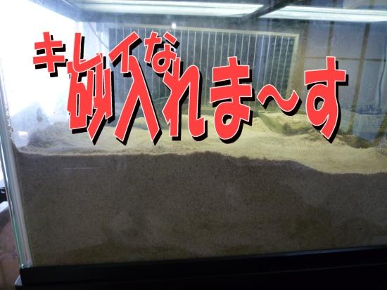 キレイ砂.jpg