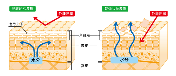 細胞・構造