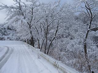 雪の道.JPG