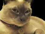 猫さんプロフィール