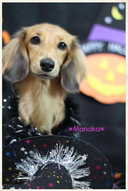 monaka