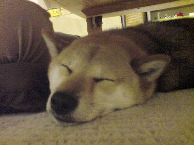 良く寝る桃子
