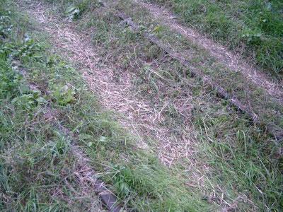 雑草に埋もれた線路