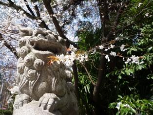 神社のこま犬 桜