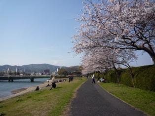 花見2010.4.4 006.jpg