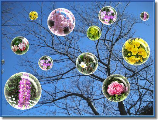 春を待つ木